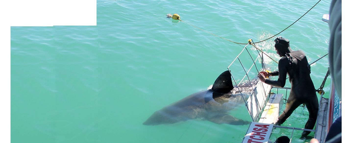 Great White Shark Cage Diving South Africa - Shark Diving Tours - Marine Dynamics